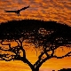4-501_African_Sunset